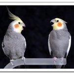طيور Size:101.20 Kb Dim: 802 x 560