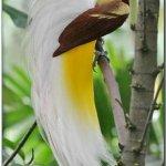 طيور Size:28.00 Kb Dim: 380 x 541