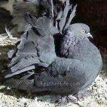 الطيور والجوارح4
