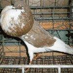 الطيور والجوارح2