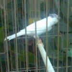 kasque -blanc