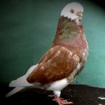 الطيور والجوارح10