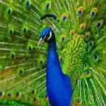 الطيور والجوارح3