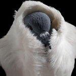 الطيور والجوارح7