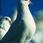 طيور Size:40.10 Kb Dim: 256 x 384