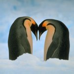 شوف الحب