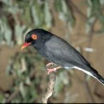 الطيور والجوارح9