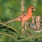 الطيور والجوارح15