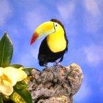 الطيور والجوارح14