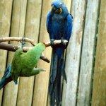 الطيور والجوارح5