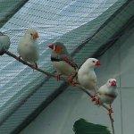عصافير Size:49.80 Kb Dim: 640 x 480