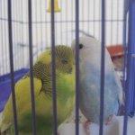 الطيور والجوارح6