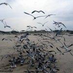 طيور - تكساس