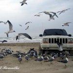 طيور بحريه