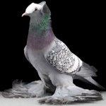 الطيور والجوارح1