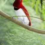 من اغرب و اجمل الصور للطيور 1