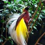 من اغرب و اجمل الصور للطيور 2 Size:58.20 Kb Dim: 326 x 456