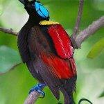 من اغرب و اجمل الصور للطيور 3