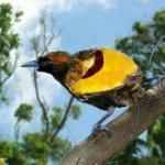 من اغرب و اجمل الصور للطيور 4