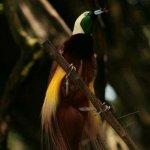 من اغرب و اجمل الصور للطيور 5