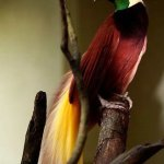 من اغرب و اجمل الصور للطيور 7