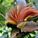 من اغرب و اجمل الصور للطيور 8