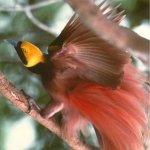 من اغرب و اجمل الصور للطيور 9
