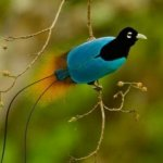 من اغرب و اجمل الصور للطيور 10