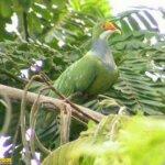 من اغرب و اجمل الصور للطيور 11