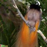 من اغرب و اجمل الصور للطيور 12