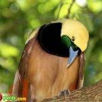 من اغرب و اجمل الصور للطيور 14