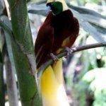 من اغرب و اجمل الصور للطيور 15