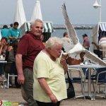 طيور البحر .. تسرق الآيس كريم3