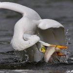 دلع الطيور1