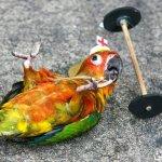 دلع الطيور5