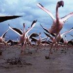صور لضبع يقوم باصطياد طير الف1
