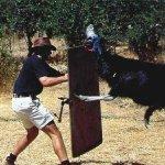 cassowary اخطر طيور العالم3