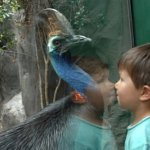 cassowary اخطر طيور العالم4