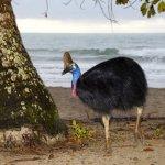 cassowary اخطر طيور العالم6