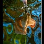 اجمل انواع الصور15