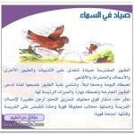الطيور المفترسة1