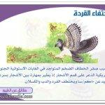 الطيور المفترسة7