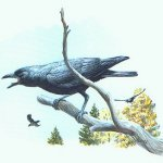أذكى أنواع الطيور على وجه الأ1