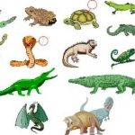 زواحف وحشرات1 Size:28.20 Kb Dim: 419 x 321