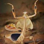 شاهد اغرب الحشرات في العالم8 Size:42.70 Kb Dim: 346 x 500