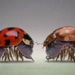 عالم الحشرات الجميلة9 Size:21.20 Kb Dim: 550 x 366