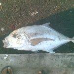 سمكة الجولان