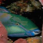 سمكة22
