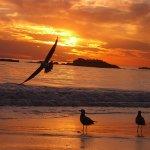 الشواطئ والبحار والأنهار4