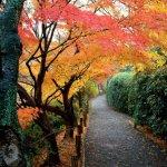 فصل الخريف  7 Size:265.40 Kb Dim: 1024 x 768